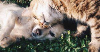En hund og en kat